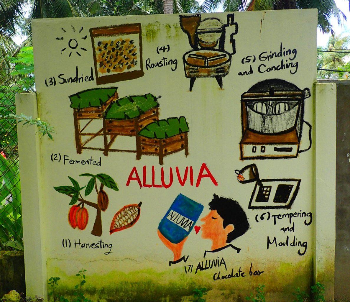 Cocoa plantation Mekong delta