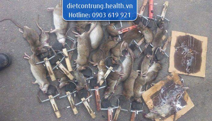 công ty diệt chuột tphcm