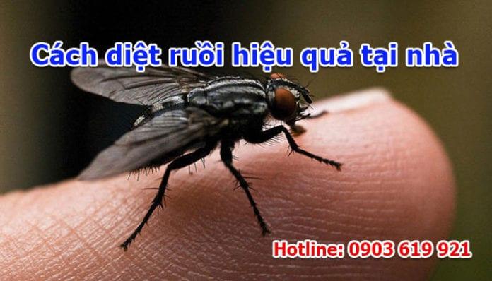 cách diệt ruồi hiệu quả tại nhà