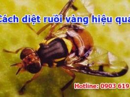 cách diệt ruồi vàng hiệu quả