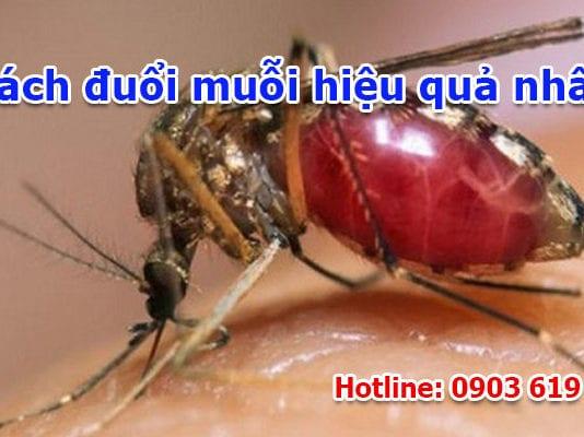 cách đuổi muỗi hiệu quả nhất