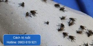 cách trị ruồi