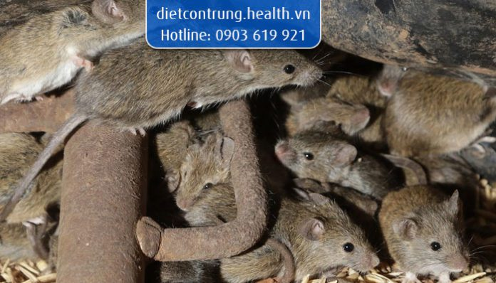 mẹo đuổi chuột